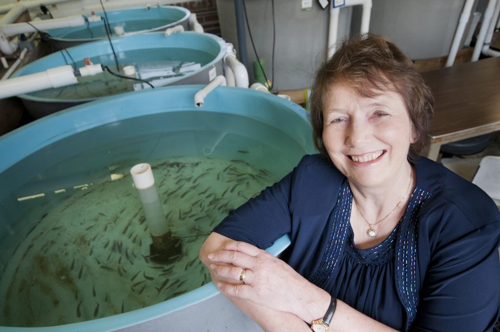 Nancy Denslow (Source: UF College of Veterinary Medicine)